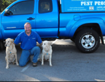 pest removal service free estimates